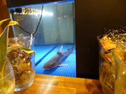 水槽の中のドチザメ